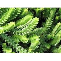 Variedad De Cactus Y Crasas