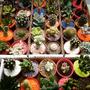 Set X 10 Cactus Y Crasas En Maceta 6 Con Piedras De Colores