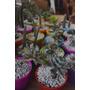 Cactus Y Crasas, Especial Souvenir Maceta Nº6 Cacto Cactus
