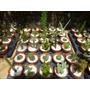 Set De 10 Cactus Crasas Suculentas En Macetas De Barro Nº7