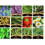 Semillas Aromáticas En Sobre Ideales Para Huerta X 10 Unid