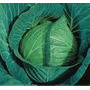 Semillas Repollo X Sobre Viveruski Huerta Hortaliza Verdura