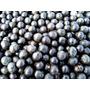 Açai La Super Fruta - Palmera Del Palmito Semillas P/cultivo