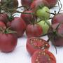 Semillas De Tomate Cherry Negro