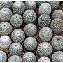 45 Semillas De Cactus Mammillaria Hahniana