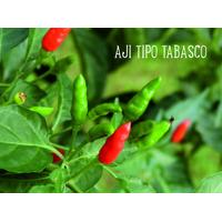 Semilla Aji Tabasco Picante - Semillas Raras X 10 Un,