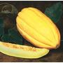 Melon Amarillo Alargado Con Vetas Fruta Semillas P/ Plantas