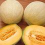 Melon Cantaloupe Iroquois Fruta Semillas Para Plantas