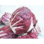 Semillas De Achicoria Italiana Precoz Palla Rossa