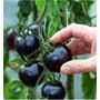 Semillas Genuinas Tomate Kumato Nro 1 En Sabor En El Mundo