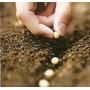 Sustrato Profesional Para Cultivo - Compost