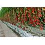 Fertilizantes Hidroponia, Para 8000 Litros (sales Minerales)
