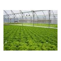 Fertilizantes Hidroponia Para 1000 Litros + Libro Formato Cd