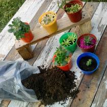 Sustrato, Tierra Para Cactus Y Suculentas