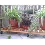 Deck Con Ruedas Para Macetas 1 Mtrs X 30 Cm