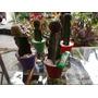 Cactus Injertados...un Regalo Original !!!!!... Plantas=vida