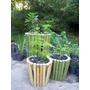 Portamacetas De Cañas Tacuara Bambú