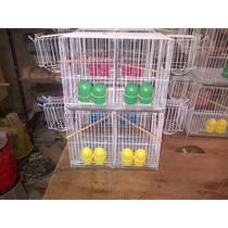 Jaula De Cria Canarios Y Otras Especies