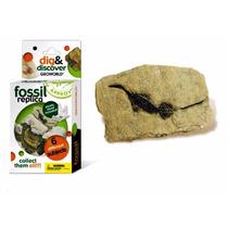 Réplica De Fósil De Reptil Marino Geoworld Dig & Discover