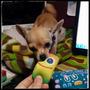 Juguetes Vellon Siliconado Para Perros Micro/ Mini/ Medianos