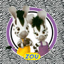 Kit Imprimible Zou La Cebra Candy Bar Invitaciones Deco