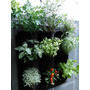 Huerta Vertical Aromáticas Plantines Hortalizas Plantas