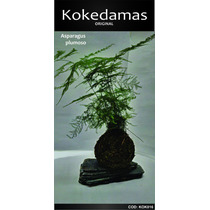 Kokedamas Oringinal - Asparagus Plumoso - Kok Arte Natural