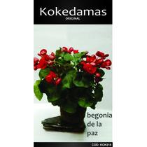 Kokedama Begonia De La Paz