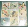 Figuritas Escolares Antiguas Plancha Insectos Every Ilustrad