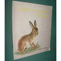 Libro Infantil Nosotros Vivimos En El Bosque Roma 1962