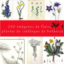 Scrapbook Decoupage Kit De Láminas Botánicas Flores