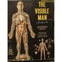 Figura Humana - Hombre - Cuerpo Transparente