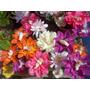 10 Bebes De Hada En Flores - Souvenir Bautismo/ Babyshower