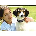 Cerco Invisible Para Perros De 7 A 15 Kgs Pet Safe Ee.uu.