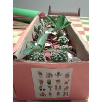 Cactus Sabotenki