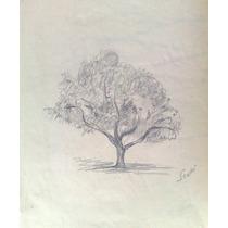 Ernesto Scotti Dibujo Original, Lapiz Sobre Papel 21,5 X 32