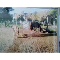 Fotos De Paisajes Con Animales