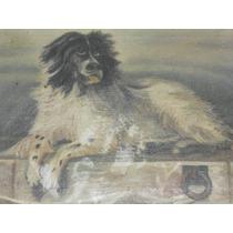 Hermoso Cuadro Al Oleo -perro-