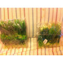 Plantas Artificiales Para Acuario O Terrario