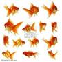 Goldfish Chico Surtido:);! Elegi Mundo Acuatico