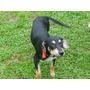 Cachorra En Adopción!!! Tamaño Chico