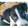 Cachorro En Adopcion Responsable.