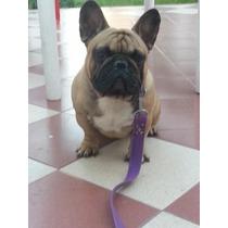 Servicio De Stud Bulldog Frances En Villa Urquiza