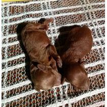 Caniches.microty De. Verdad Mama 020.cm