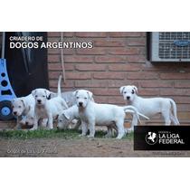 Cachorros Dogo Argentino Fca, Puros, Excelentes. Con Papeles