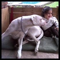 Dogo Argentino,cachorros Pedigree.esta Semana Hotsale $5200.