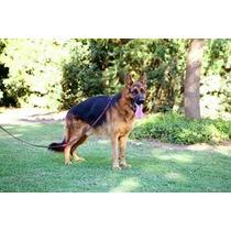 Seguridad En La Casa-del Copal-lobos.