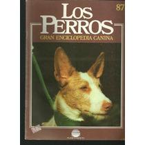 Enciclopedia Canina Perro Sabueso