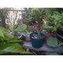 Cactus Hermosos Y Grandes
