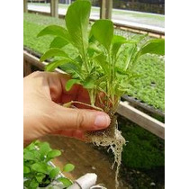 Kit Nutriente Hidroponia 1000 Litros